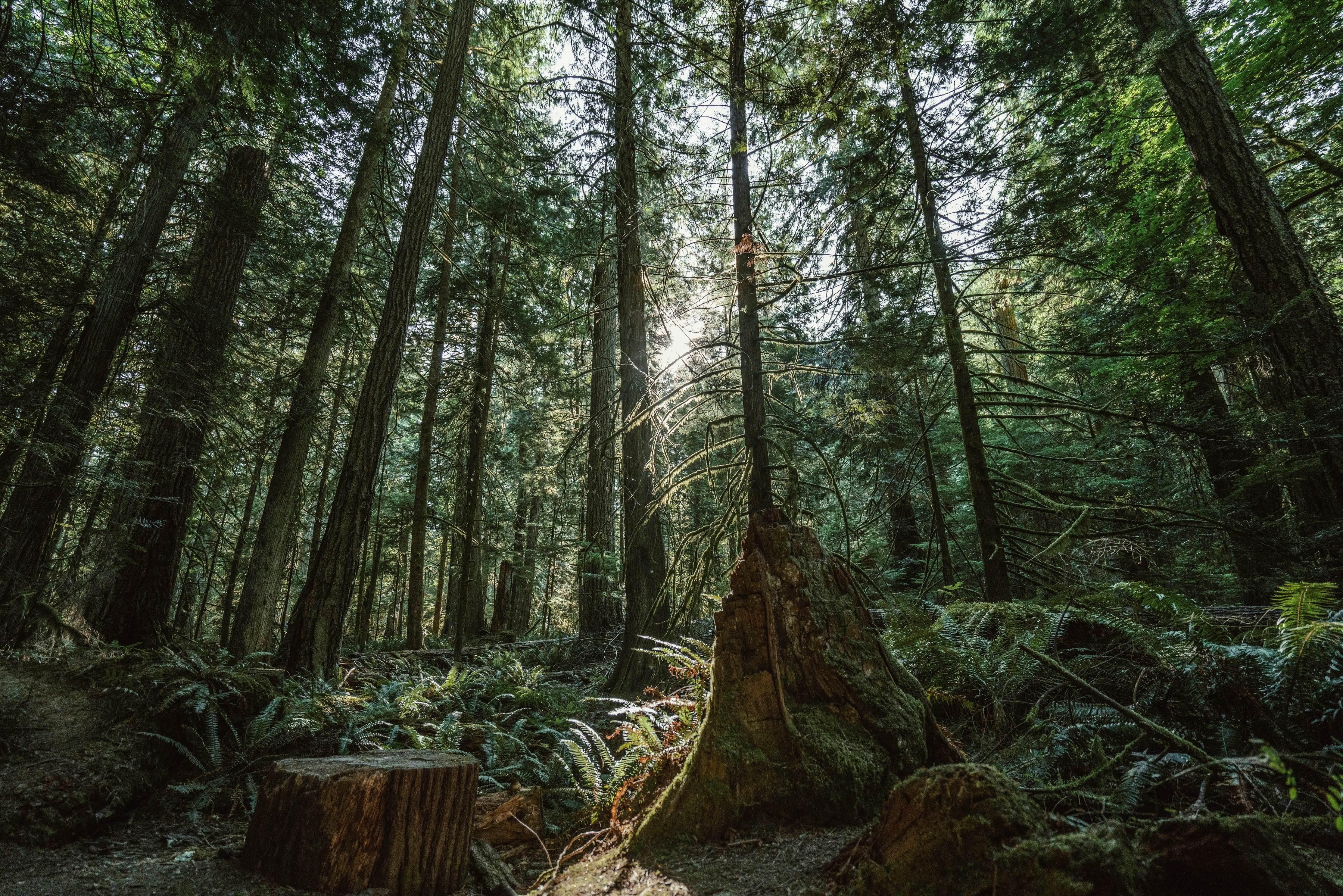 Forêt Zecs environnement climatique