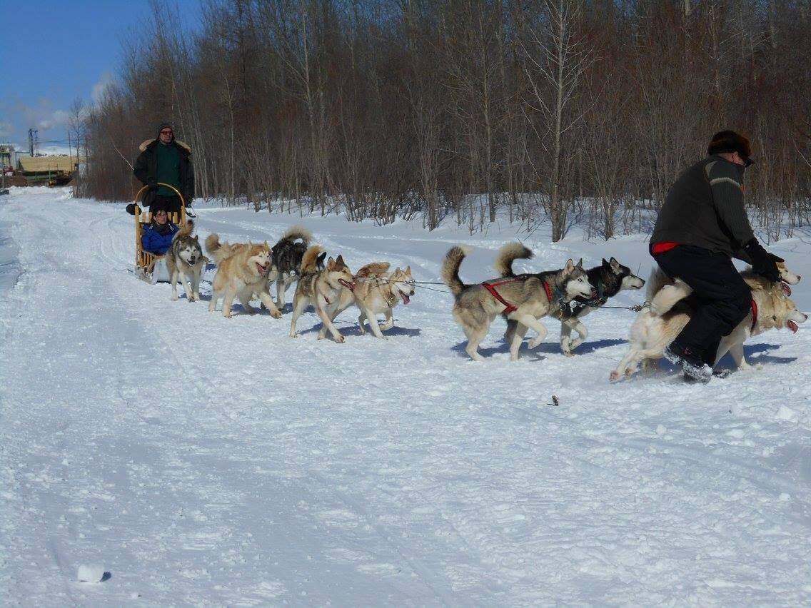 Carnaval Landrienne chiens