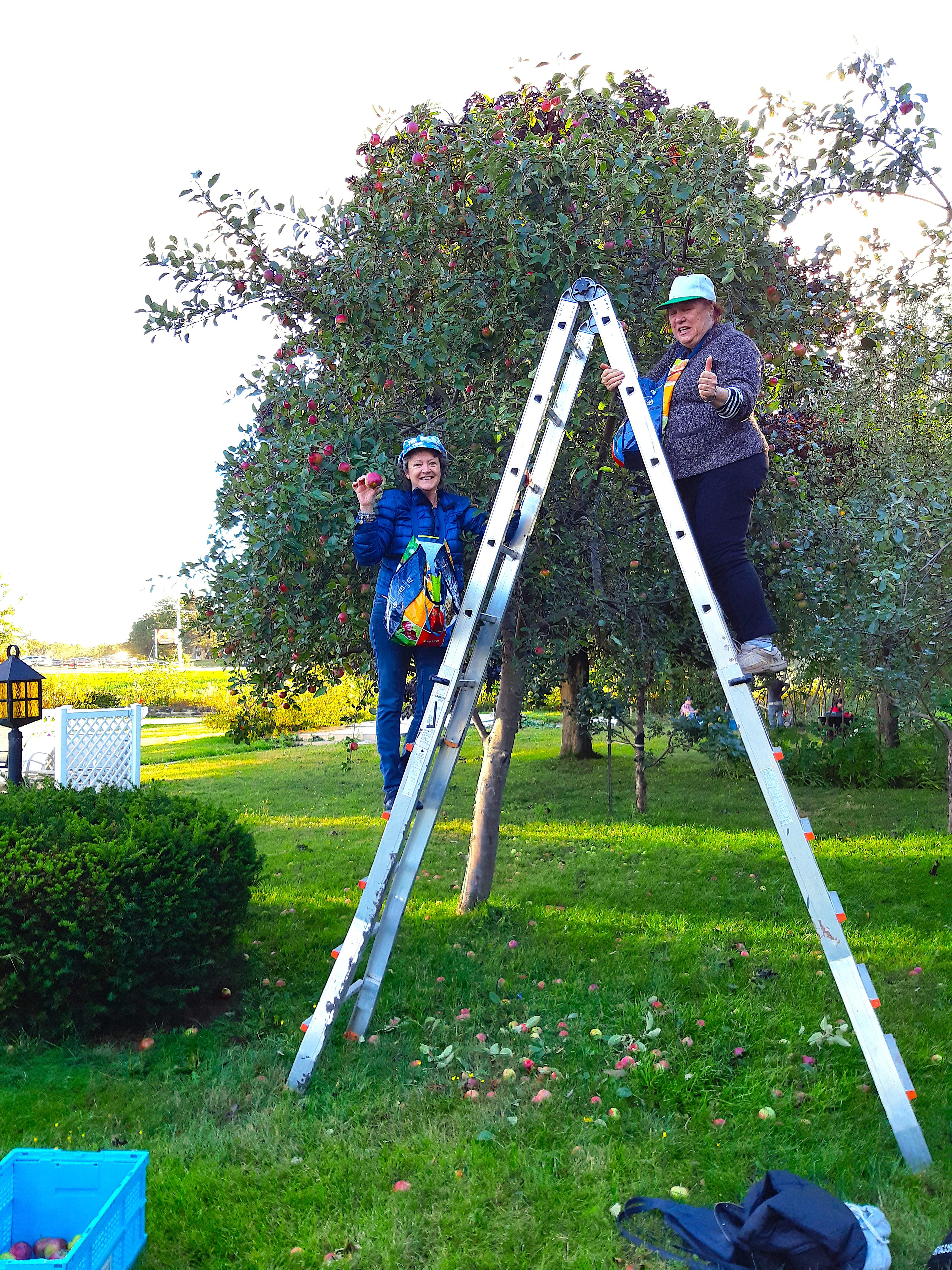 Fruits partagés Moisson Rimouski-Neigette