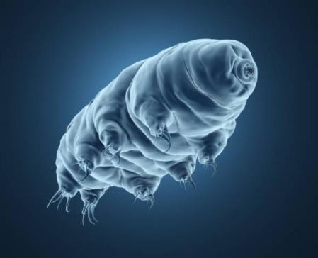 Le tardigrade est l'organisme le plus résistant sur la planète.