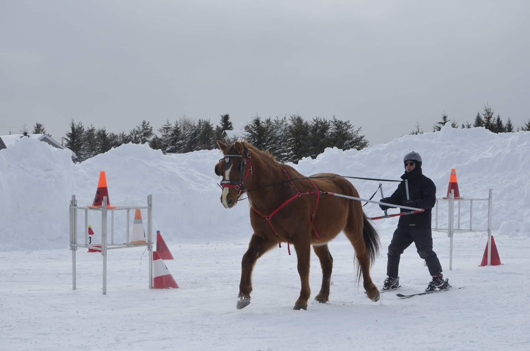 Ski joëring à cheval