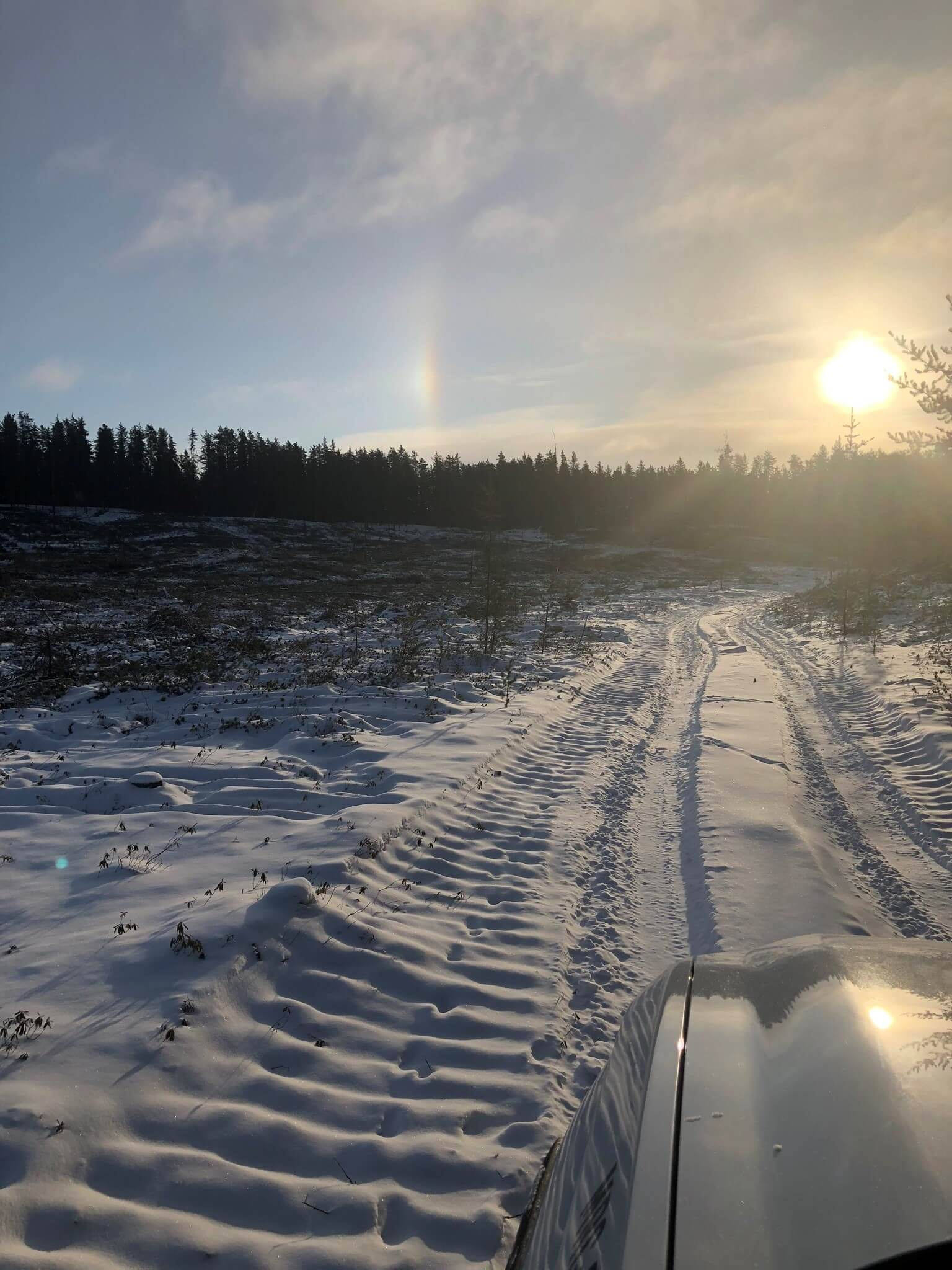 coupe forestière MRC ski fond 2