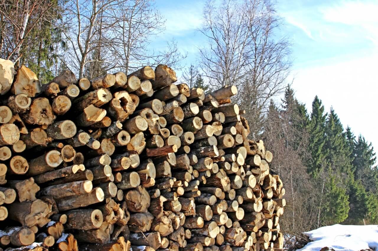 Opérations forestières bois tiges