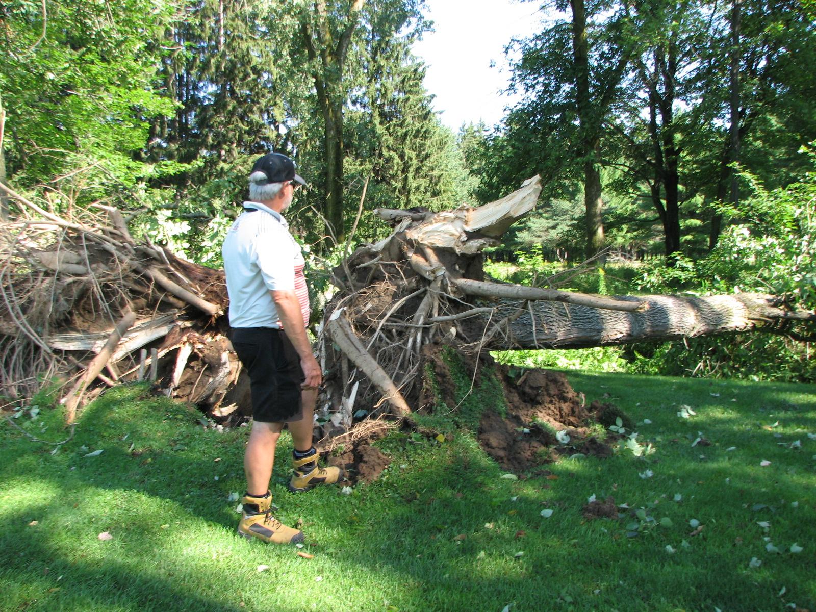 observation d'arbres déracinés