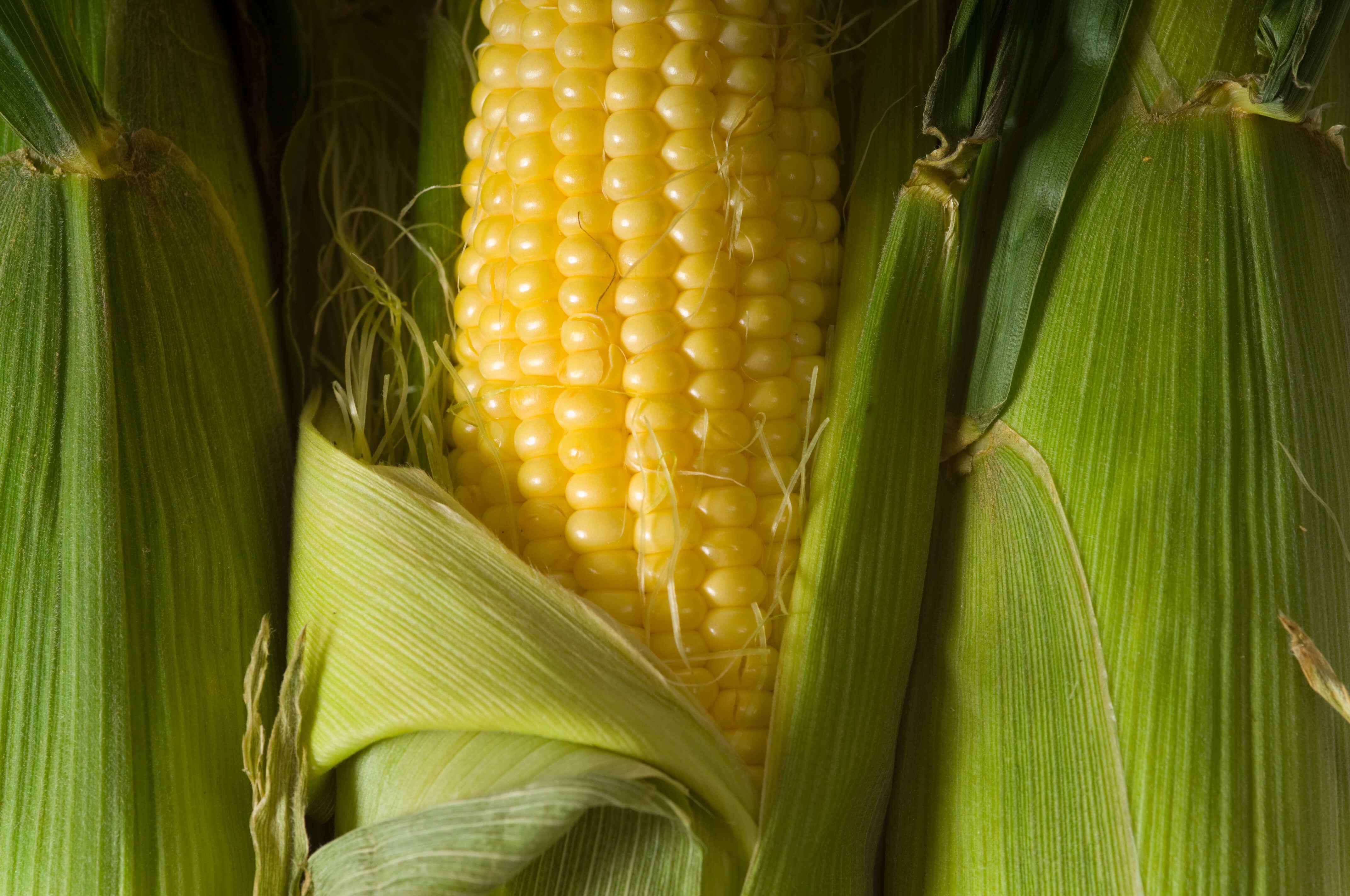 Épluchette de blé d'Inde