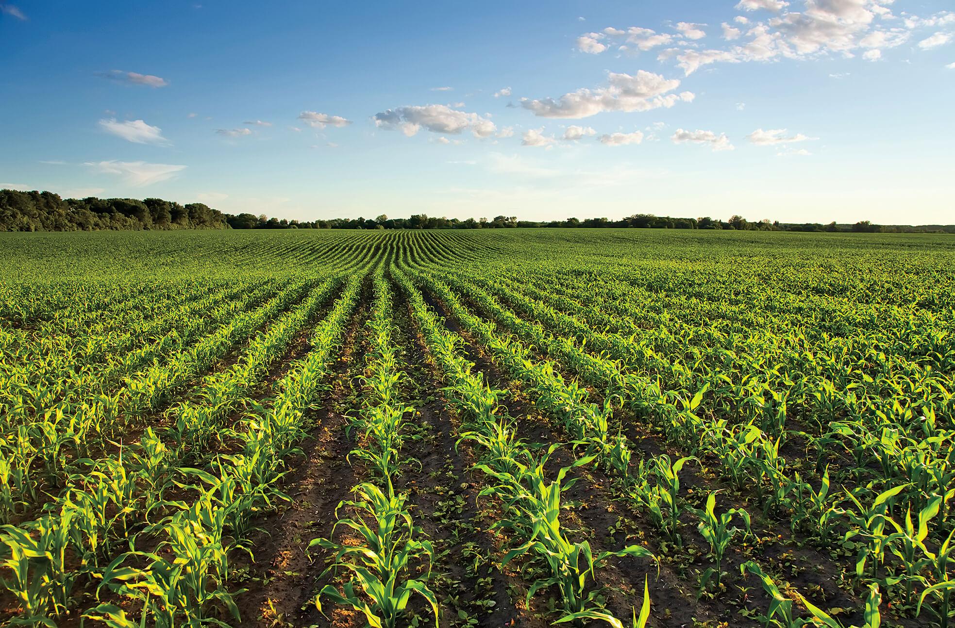 Sécheresse récolte dans Montcalm