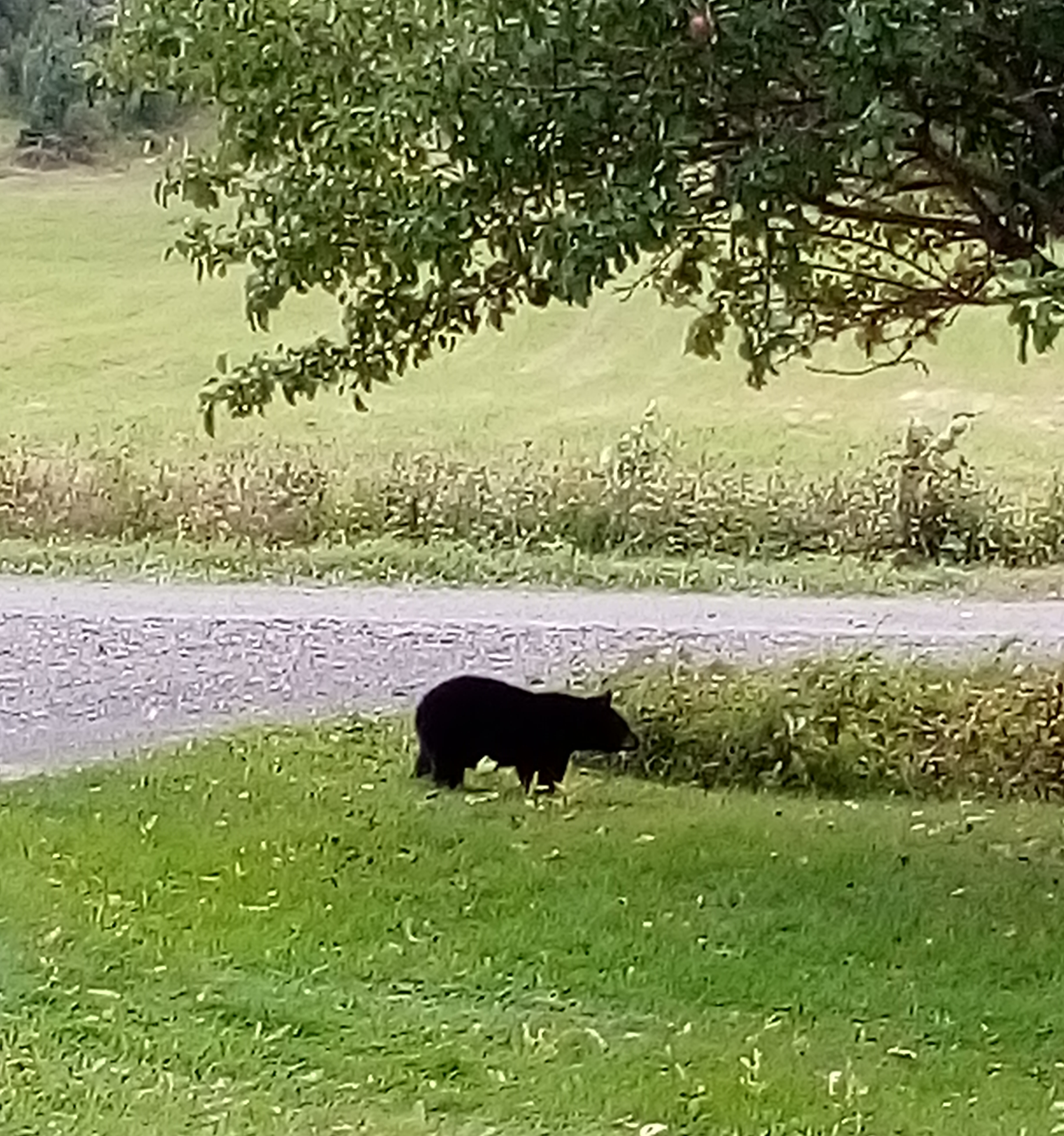 ours noir causapscal