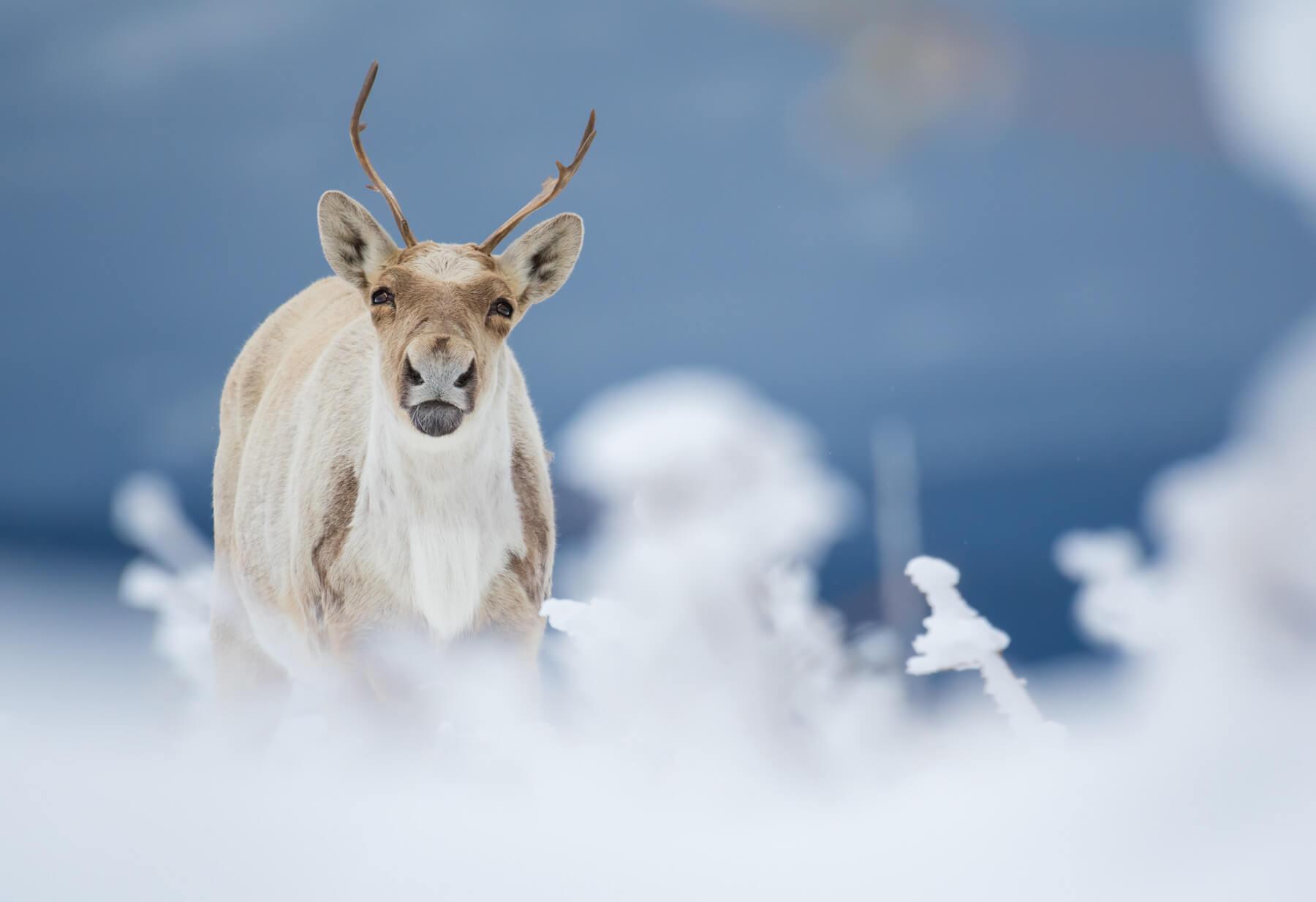 Éric Deschamps es spécialise dans les clichés de bêtes sauvages et de paysages.