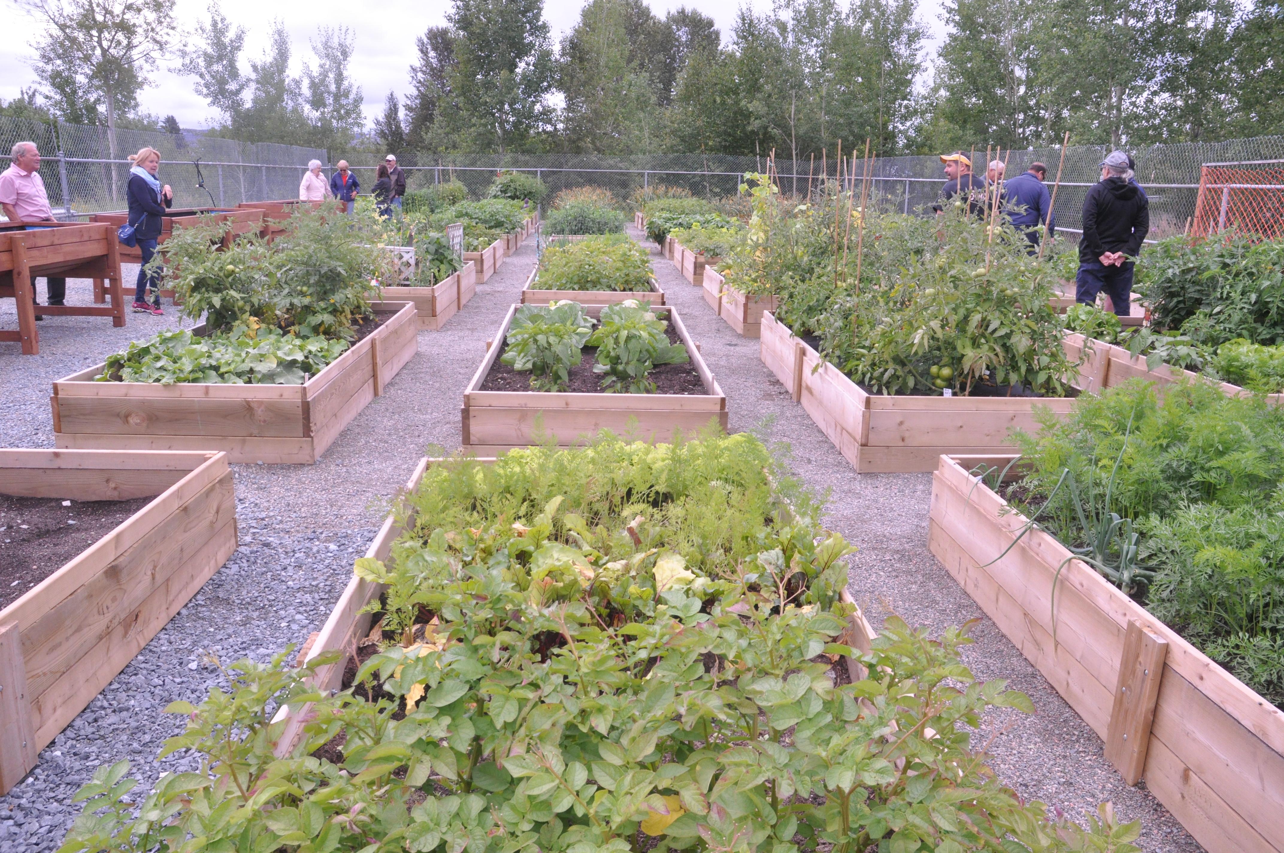 Jardin communautaire de malartic