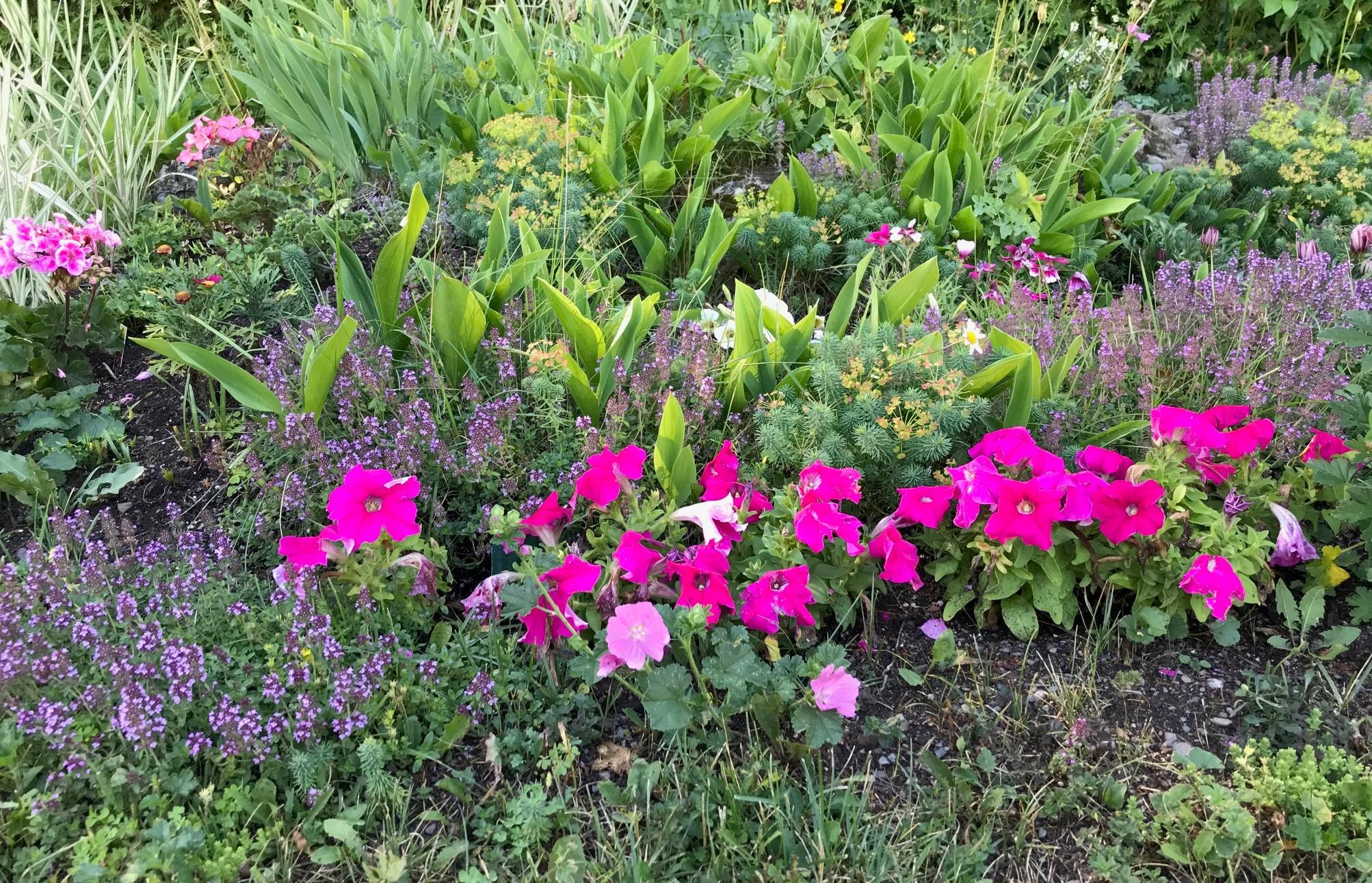 Aménagement paysager, fleurs, jardin