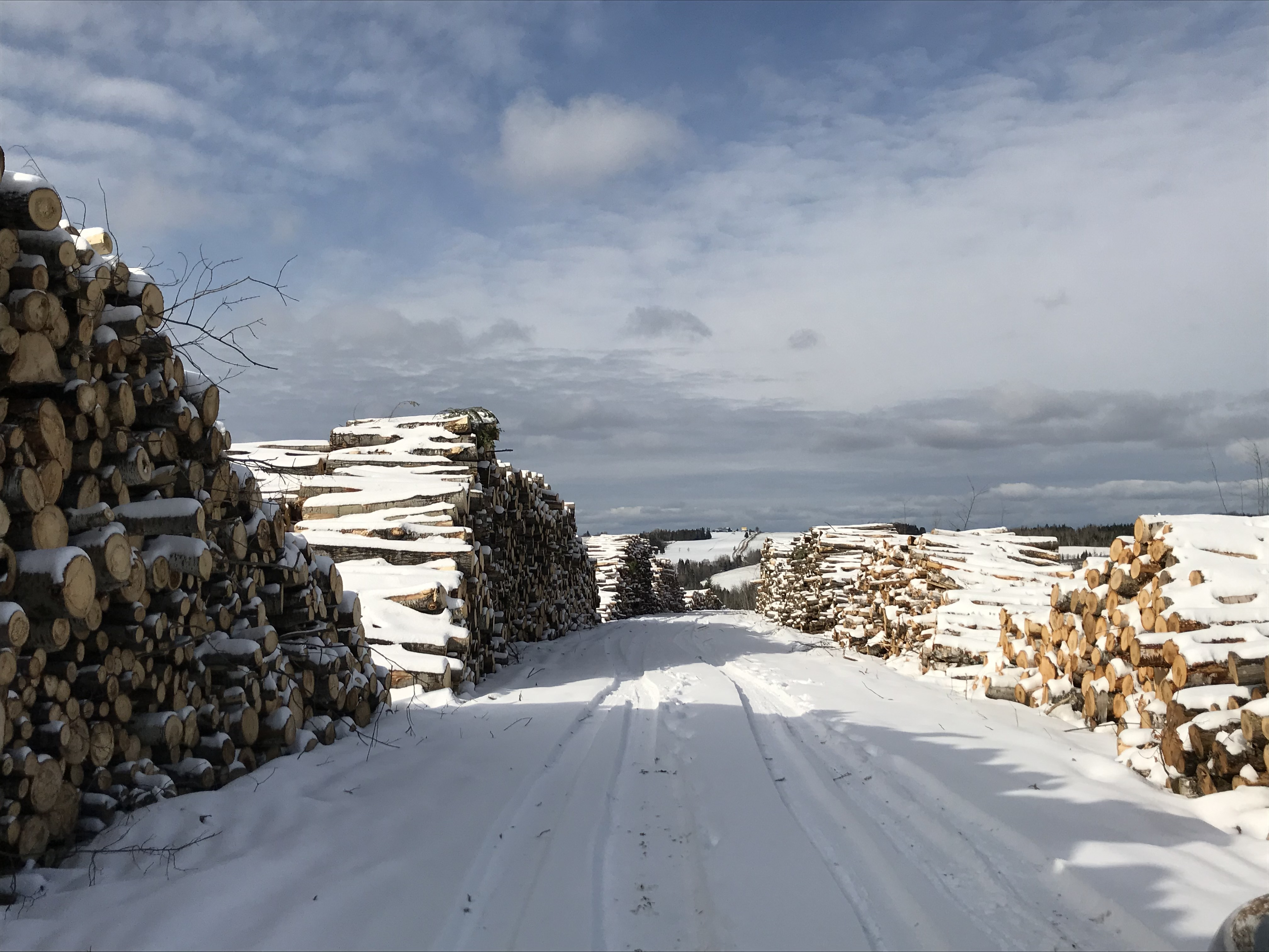 Les producteurs forestiers du Bas-Saint-Laurent ont connu une bonne année 2019.