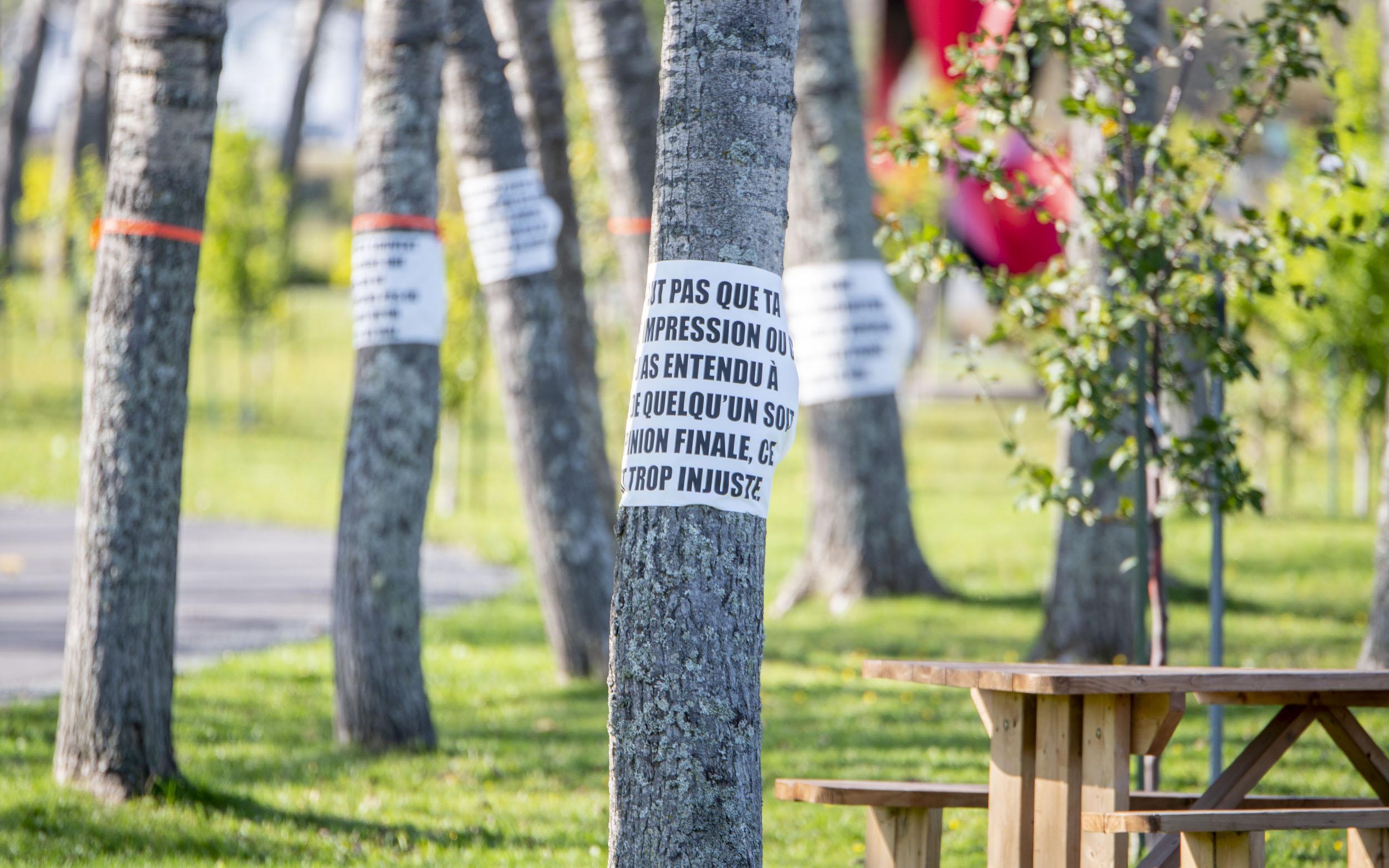 Mathieu Savoie exposition Matane L'arbre qui cachait la forêt