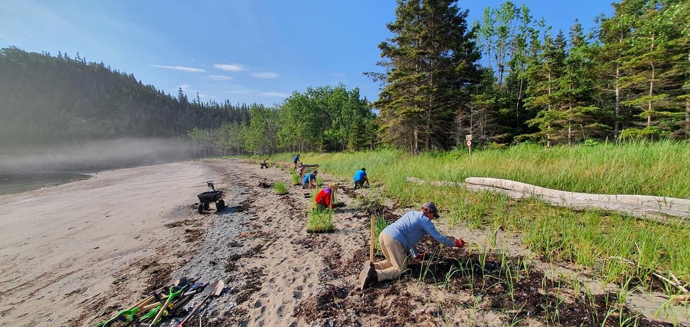 Quelque 30 000 plants ont été installés, l'été dernier, pour préserver la plage du chemin du Nord au parc du Bic.