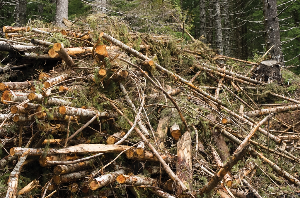Biomasse résidus foestiers