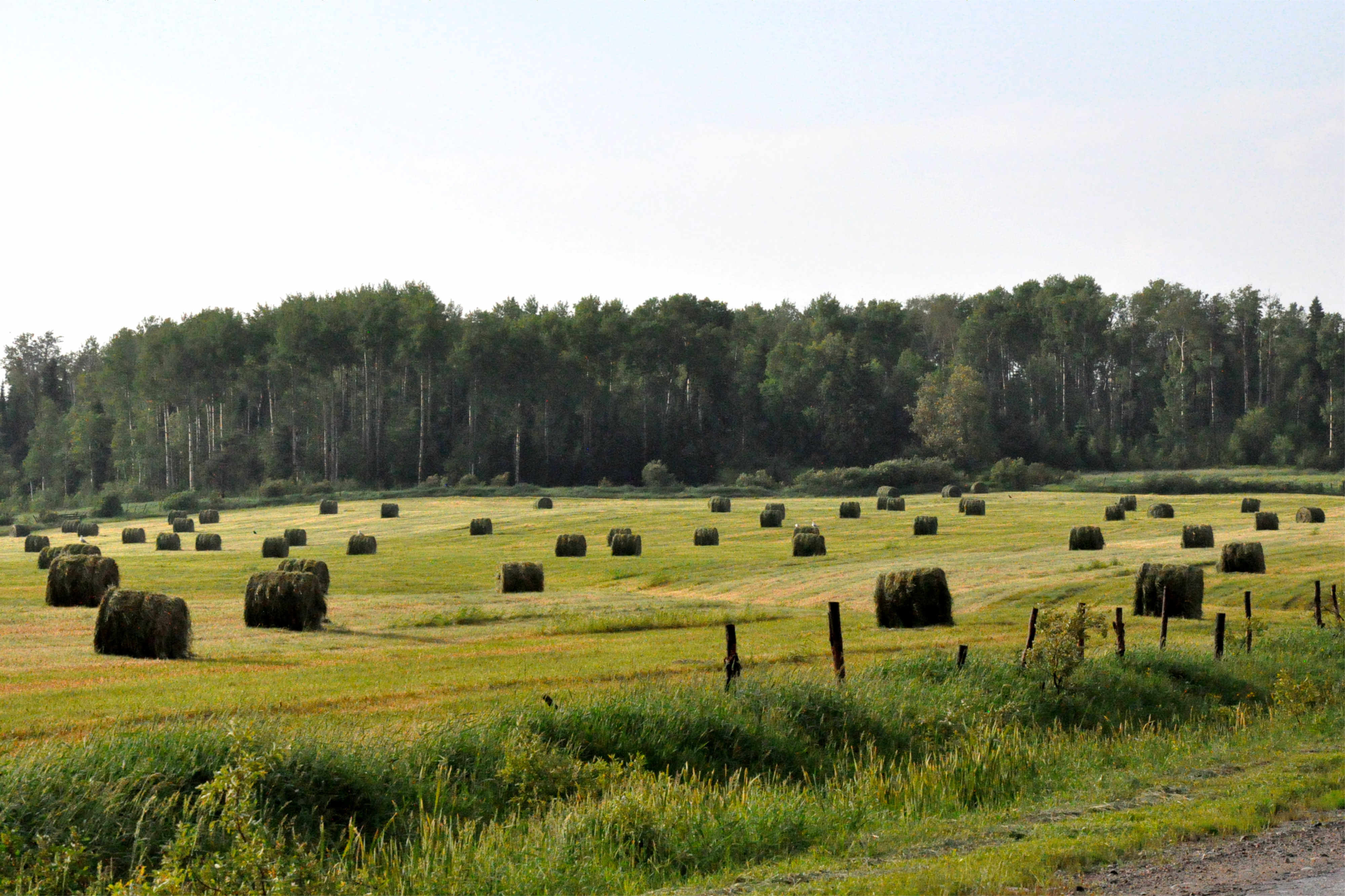 agriculture Temiscamingue terres arables