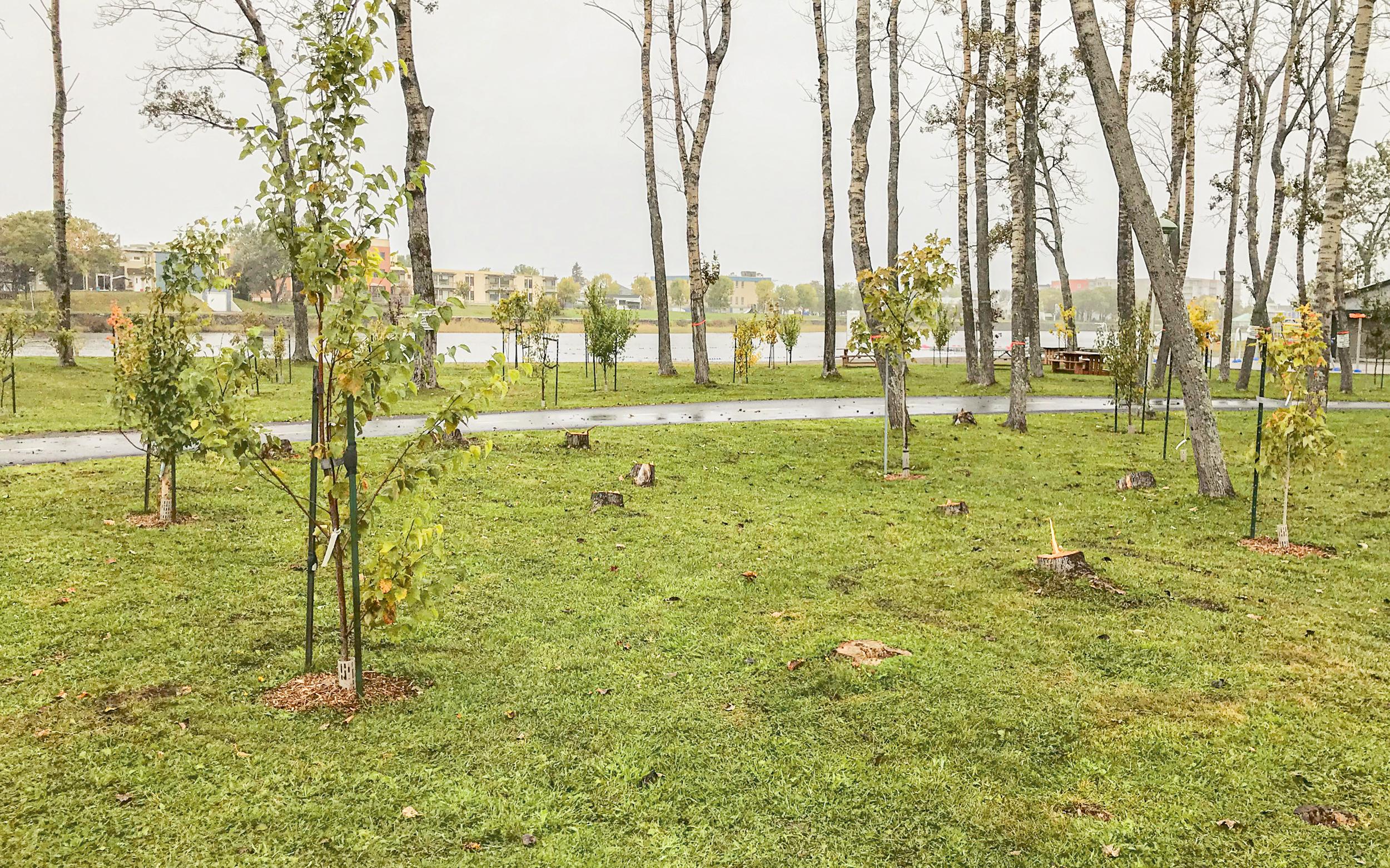 Coupe arbres Ville de Matane