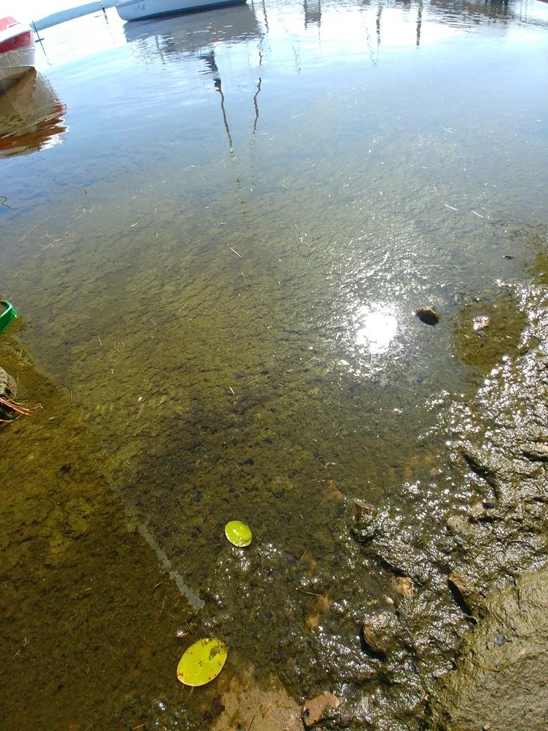 Dépôts lac Maskinongé