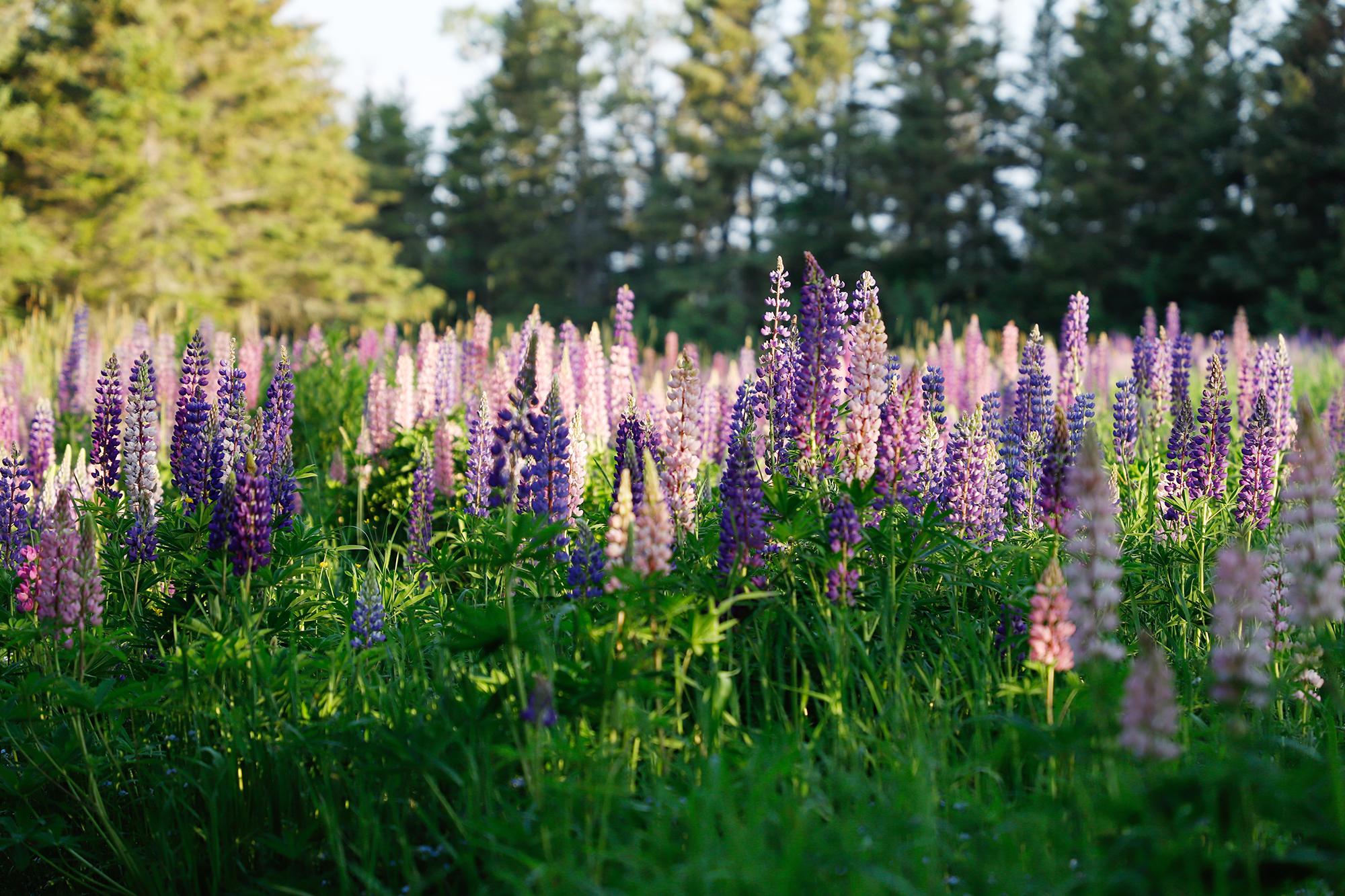 Les Jardins de Métis célèbrent, cette année, la liberté que procure le grand air avec une programmation qui intègre musique, théâtre, danse, littérature, écologie, histoire, conservation et floraison.