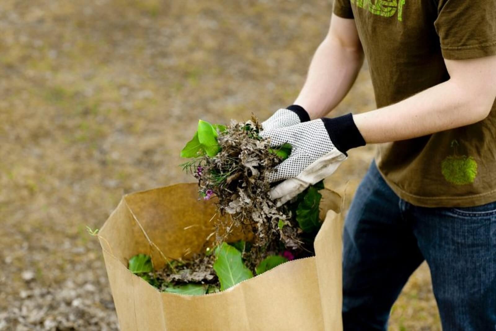 collecte automnale des surplus de résidus verts