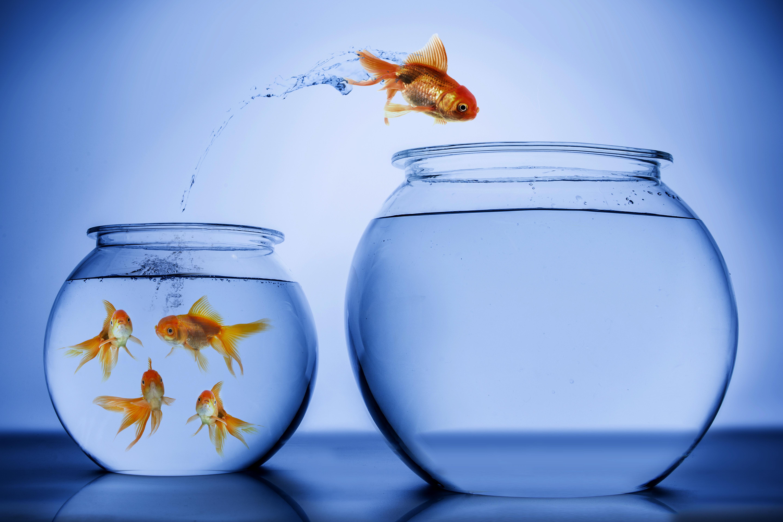 poisson rouge bocal aquarium