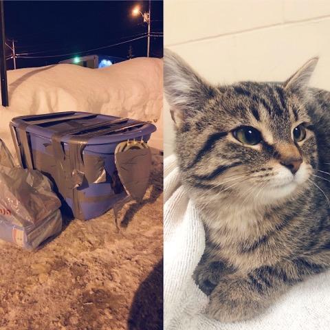 Chat abandonné Refuge la Bonne Étoile Rouyn-Noranda