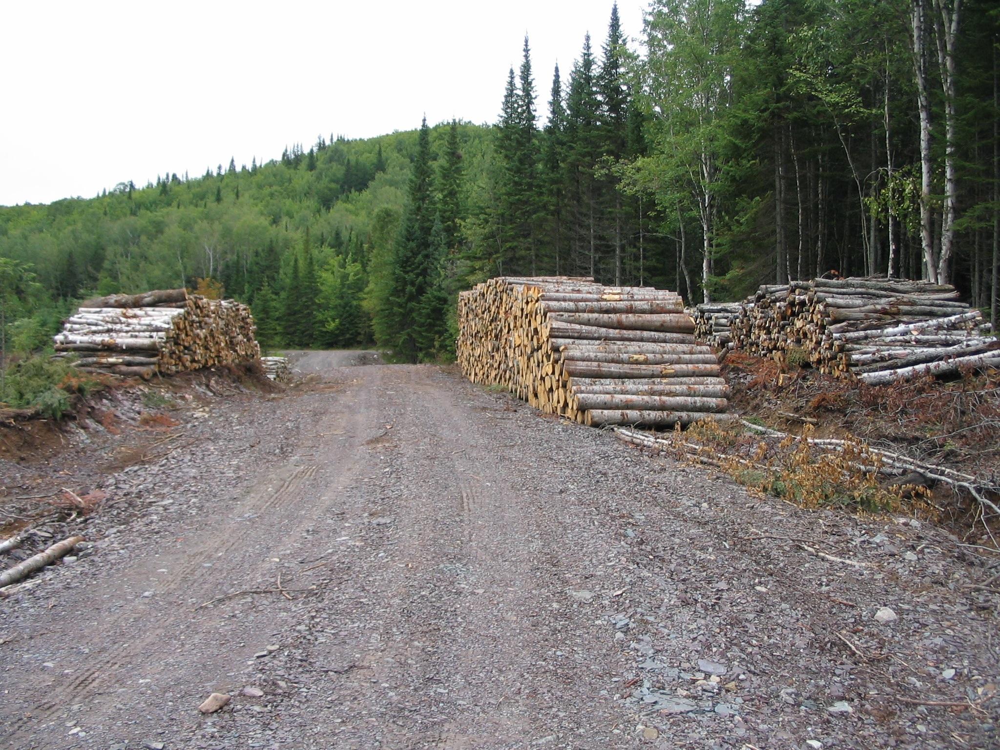 L'Agence régionale de mise en valeur des forêts privées du Bas-Saint-Laurent veut stimuler l'intérêt des propriétaires de lots boisés privés à se prévaloir des avantages que procure le statut de producteur forestier.