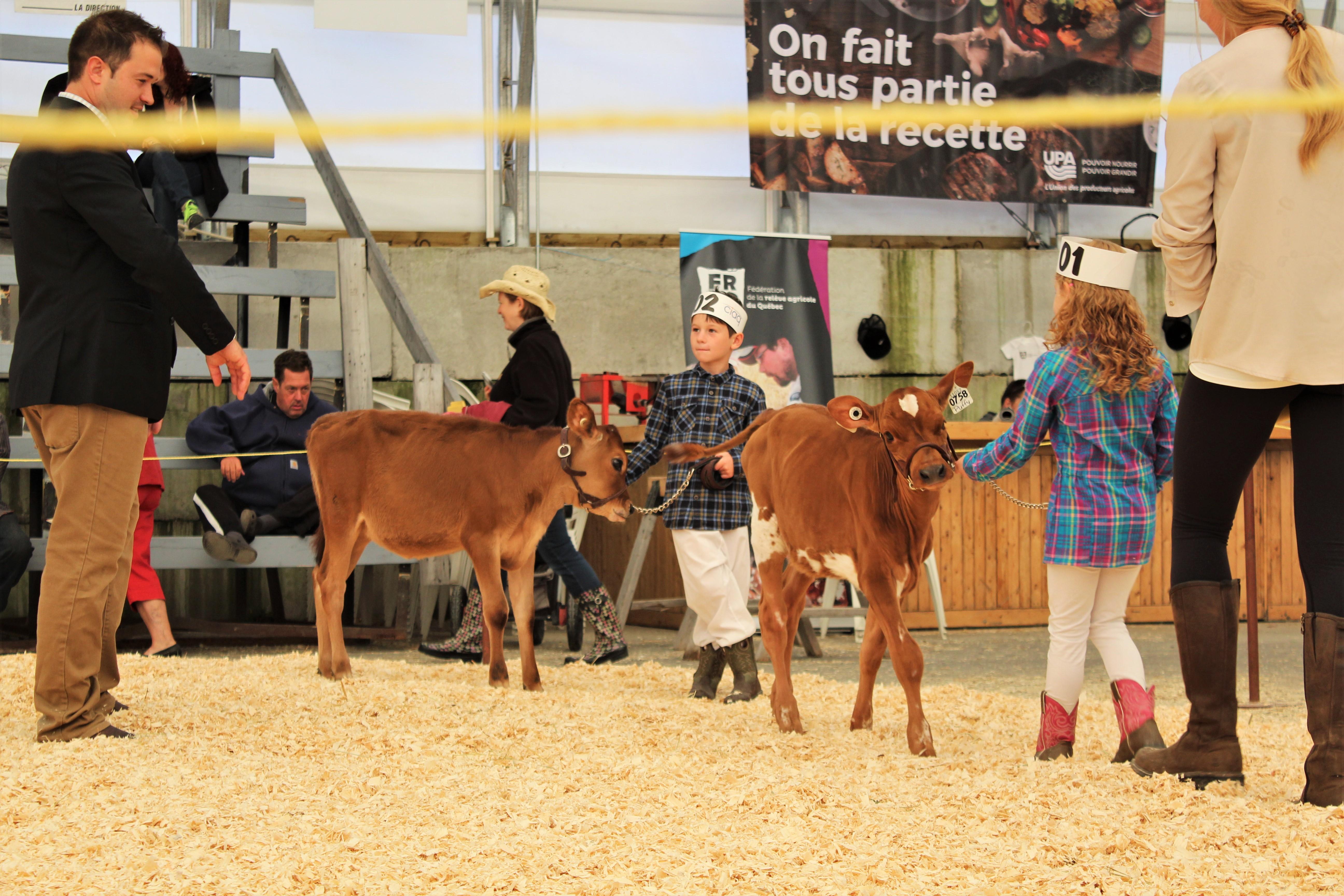 Jugement jeunes éleveurs Expo agricole